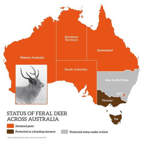 Is Victoria smart enough to declare deer a pest ...