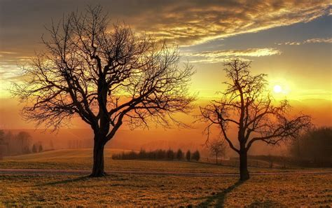 Wallpaper Golden Tree by Bare Trees Field Golden Sunset Wallpapers Bare Trees