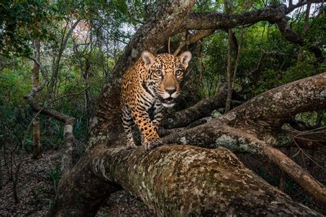 National Geographic Best Pictures by The Best Photos From National Geographic Best Images Of 2017
