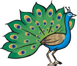 animated peacock pics clipart best