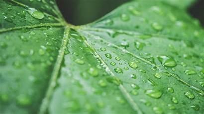 Leaf 4k Raindrops Close Nature Picjumbo Background