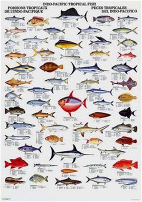 fishes   maldives identification chart water