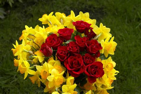 free pic of flowers free flowers photo and wallpapers