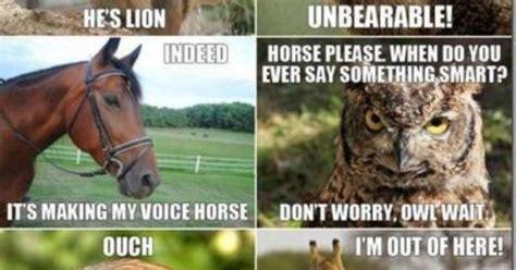 animal puns  great   exploring homophones inexact