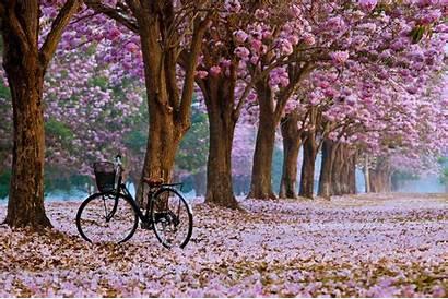 Spring Landscape Wallpapers Desktop Trees Vector