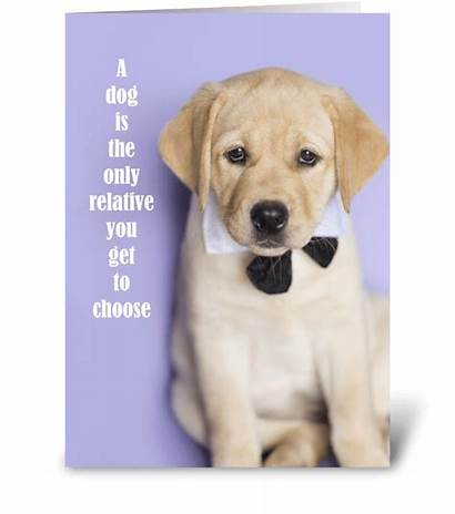 Funny Yellow Lab Relative Card Cards Greeting