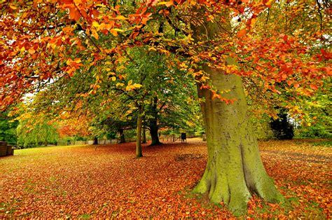 color, Autumn, Trees, Landscape Wallpapers HD / Desktop ...