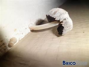 champignon dans chambre non chauffee With champignon de maison dangereux