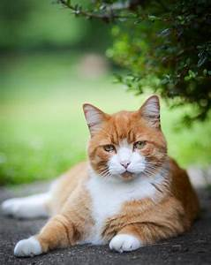 Ginger Tabby Images - Reverse Search