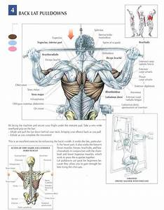 Behind The Neck Lat Pulldowns    Go To The Chest If You