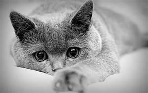 Cat Backgrounds Desktop | PixelsTalk.Net