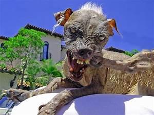 Alnepo Buzz: ugly animals in world