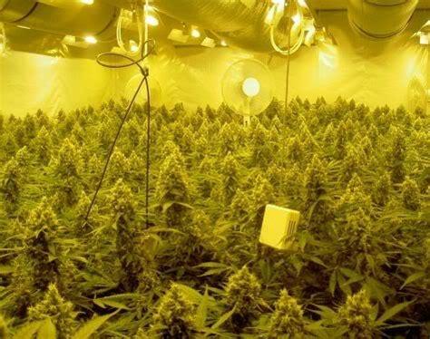 meilleur chambre de culture les meilleures les de culture de marijuana
