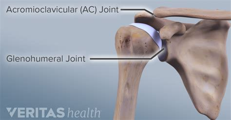 Acromioclavicular Joint Anatomy And Osteoarthritis