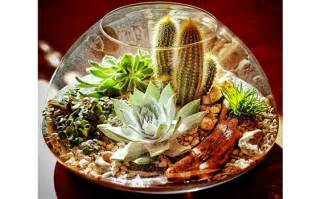 9 steps to make a terrarium using succulents cacti realestate au