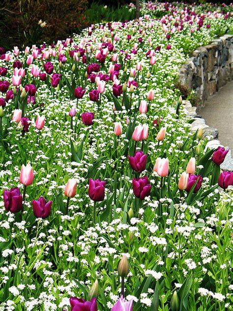 Garten Tulpen Pflanzen by Tulpen Sommer Blumen Pflanzen Gr 252 N Garten Blumenbeet