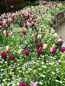 Garten Blumen Pflanzen : tulpen sommer blumen pflanzen gr n garten blumenbeet einladend nat rlich fr hling im ~ Markanthonyermac.com Haus und Dekorationen