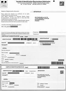 Carte Grise Changement Adresse Gratuit : changement adresse carte grise ~ Gottalentnigeria.com Avis de Voitures