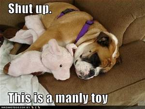 Waiting BD: Cute Dog 'Thing' of the Day, The Latest Funny ...