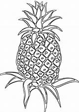 Pineapple Coloring Pineapple1 sketch template