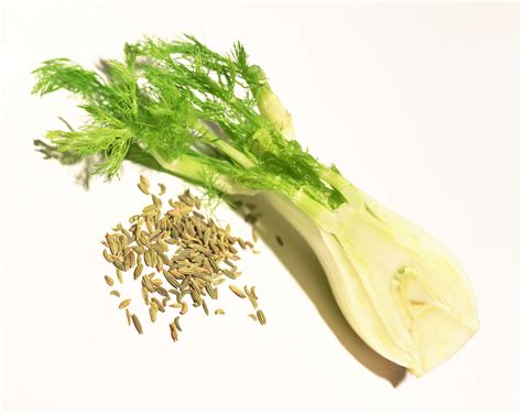 Fennel Breastfeeding And Increasing Breast Milk Supply