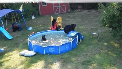 Pool Backyard Cubs Play Buzzfeed Mother Pools