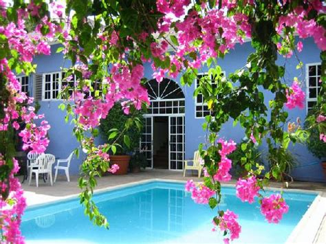 flowers for the house flowers and pool at blue house picture of the blue house boutique bed breakfast ocho rios