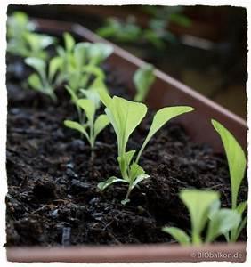 Salat Pflanzen Abstand : gem se auf dem balkon 5 pflanzen f r den einstieg ~ Markanthonyermac.com Haus und Dekorationen