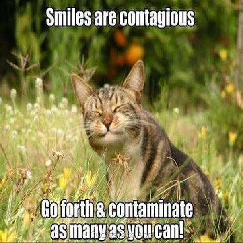 Smile Funny Meme - meme resimler sorgusuna uygun resimleri bedava indir