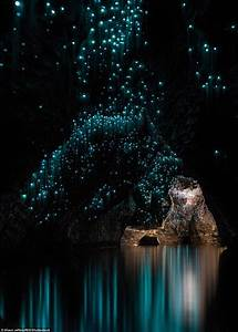 New Zealand Glow Worms Create A  U0026 39 Surreal Environment U0026 39  In