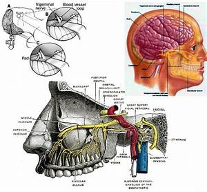 30 Best Images About The Body  Anatomy Help  On Pinterest