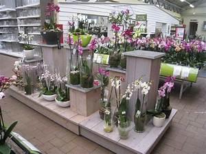 Orchideen Im Glas : erneuerte orchideen abteilung tuincentrum dani ls ~ A.2002-acura-tl-radio.info Haus und Dekorationen