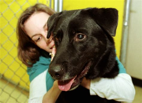 dogs   feel comfortable  hugged animal