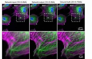Microscope Lab Deep Learning Takes Fluorescence Microscopy Into Super