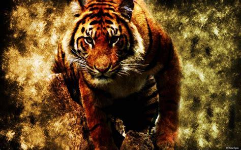 Best Desktop Wallpaper Tiger Wallpapers Tigris
