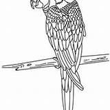 Hellokids Perroquet Papagei Ara Loros Q7x R2e Papagayo sketch template