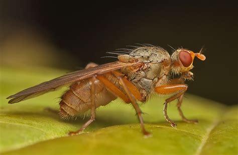 http://www.ukrup.com.ua/en/garlic-fly-pest-of-winter-garlic/