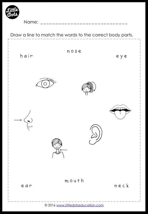 body parts worksheets  preschool