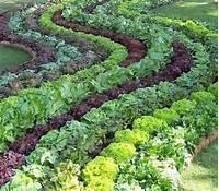 excellent edible garden design edible garden | E and M's Metricon Adventure