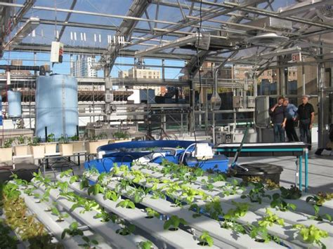 the greenhouse project is a roof garden atop an nyc school
