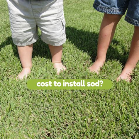 cost to lay grass cost to install sod houston grass south pearland sugar land