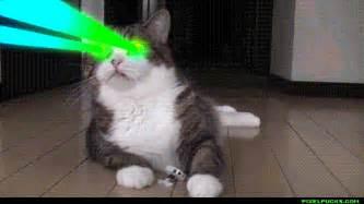 cat laser cat laser picture images
