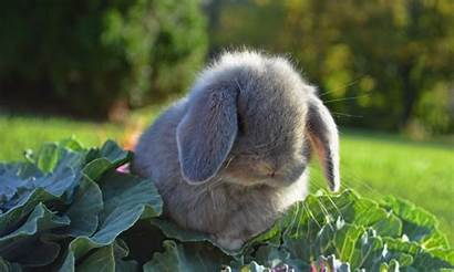 Rabbit Wallpapers Rabbits Background