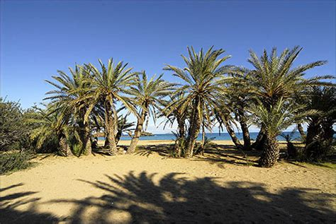 pictures of small palm trees vai travel at crete