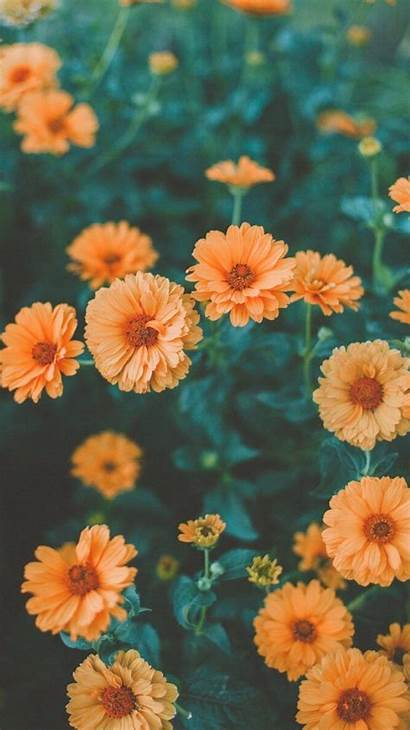 Iphone Hipster Flower Retro Wallpapers Backgrounds Orange