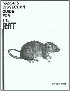 Rat Dissection Guide