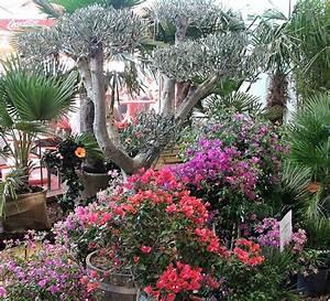 Mediterrane Pflanzen Liste : mediterrane pflanzen auf dem sonnenplatz lahr badische ~ Watch28wear.com Haus und Dekorationen