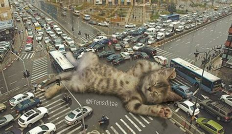 catzillas giant cats  urban landscapes