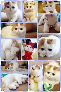 Snoopy The Cat on Pinterest | 100 Pins