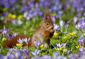Blumen Im Frühling : vorfreude auf den fr hling tiere view fotocommunity ~ Orissabook.com Haus und Dekorationen